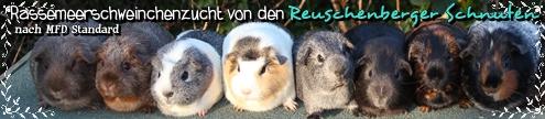 Banner Reuschenberger Schnuten